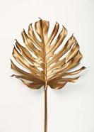 Monstrea Gold Leaf