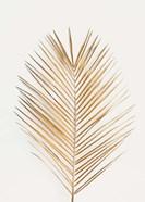 Palm Leaf Gold