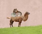 Camel on Pink