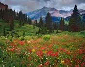 Colorado, Laplata Mountains, Wildflowers In Mountain Meadow