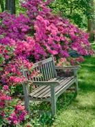 Delaware, A Dedication Bench Surrounded By Azaleas In A Garden