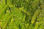 Kula Botanical Gardens, Upcountry, Maui, Hawaii