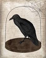 Raven Jar