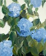 Blue Hydrangeas IV