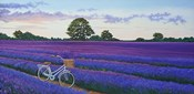Evening Lavender