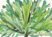 Tropical Sea Grass 1