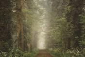 Misty Spring Road