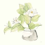 Plant Magnolia I