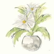 Plant Daisy II