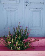 Santorini I Spring Crop
