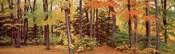 Autumn Trees In A Forest, Chestnut Ridge Park, New York