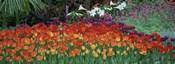 Close-Up Of Flowers In A Garden, Botanical Garden Of Buffalo, New York