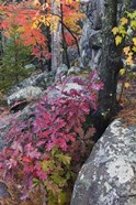 Autumn Color Foliage And Boulders Along Saint Louis River, Minnesota.