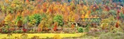 Cantilever Bridge And Autumnal Trees In Forest, Central Bridge, New York State
