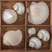 Seashells Tresasures III