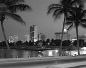 Night View Skyline With Palm Trees Miami Florida