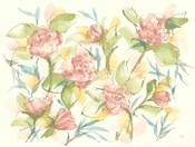 Blush Camellias