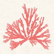 Pacific Sea Mosses IV Coral