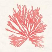 Pacific Sea Mosses II Coral