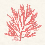 Pacific Sea Mosses I Coral