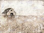 Cotton Farms