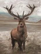 Grand Elk 1