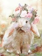 Bunny Sophia