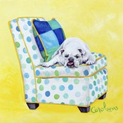Bulldog on Polka Dots