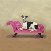 Italian Greyhound on Pink