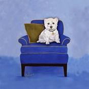 Westie on Blue