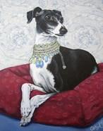 Italian Greyhound on Red