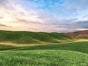 Farmscape Photo V