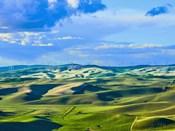 Farmscape Photo VI