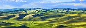 Farmscape Panorama III