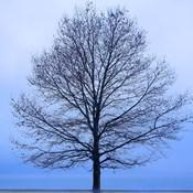 November Tree