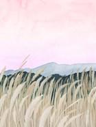 Wheaten Dawn II