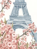 Paris Cherry Blossoms I