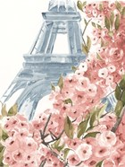 Paris Cherry Blossoms II