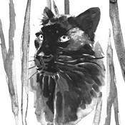 Still Cat I