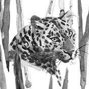 Still Cat II