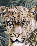 Jungle Cat II