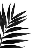 Black Palms I