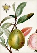 Turpin Tropical Fruit IX