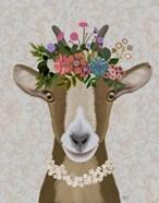 Goat Bohemian 3