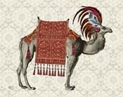 Niraj Camel, Red