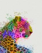 Leopard Rainbow Splash 1