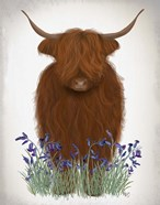 Highland Cow, Bluebell