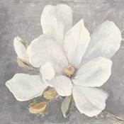 Serene Magnolia Light Gray