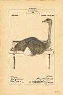 Ostrich in Sink