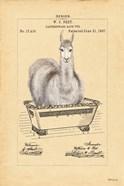 Llama in Tub